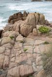 Usines et roches à la plage de point de Forcados ; Costa de la Muerte Image stock