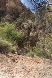 Usines et roches sur Zion Mount Carmel Highway photographie stock