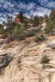 Usines et roches sur Zion Mount Carmel Highway photo libre de droits
