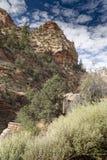 Usines et roches sur Zion Mount Carmel Highway image libre de droits