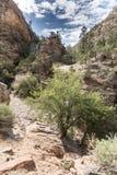 Usines et roches sur Zion Mount Carmel Highway photographie stock libre de droits
