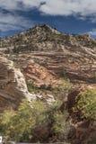 Usines et roches sur Zion Mount Carmel Highway image stock