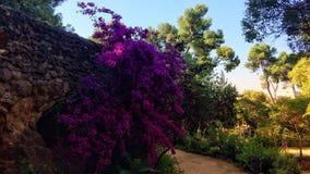 Usines fleurissantes photo stock