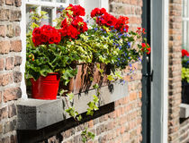 Usines fleurissantes colorées dans des pots et des boîtes de fenêtre photographie stock