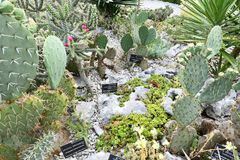 Usines fleurissantes d'angiospermes photos stock