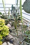 Usines fleurissantes d'angiospermes photo stock