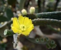 Usines fleurissantes d'angiospermes images stock