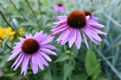 Usines fleurissantes d'angiospermes images libres de droits