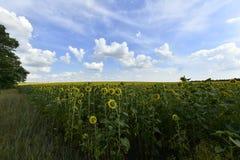 Usines fleurissantes d'angiospermes image libre de droits