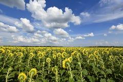 Usines fleurissantes d'angiospermes photographie stock libre de droits