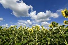 Usines fleurissantes d'angiospermes image stock
