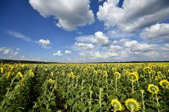 Usines fleurissantes d'angiospermes photographie stock