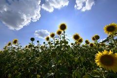 Usines fleurissantes d'angiospermes photo libre de droits