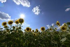 Usines fleurissantes d'angiospermes photos libres de droits