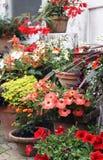 Usines fleurissantes de balcon dans des pots décoratifs image stock
