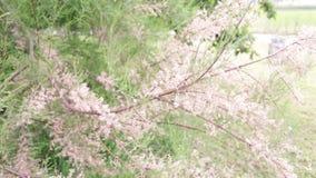 Usines, fleurs, arbres - beau détail banque de vidéos