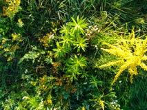 Usines, fleurs Horizontal extérieur Liberté pour votre conception images stock