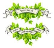 Usines fraîches d'houblon avec le vecteur de rubans de feuilles et d'ensemble de vert Image libre de droits