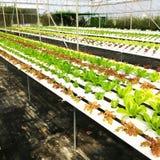 Usines hydroponiques dans la ferme Image stock