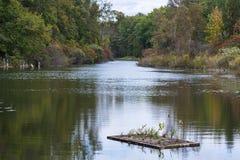 Usines hydroponiques flottant paisiblement sur une rivière en automne tôt Images libres de droits