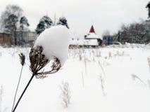 Usines jaunies sous la neige photo stock