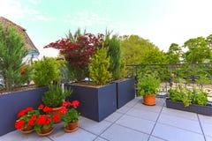 Usines mises en pot décoratives s'élevant sur un patio image libre de droits