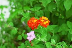 Usines oranges de feuilles de fleur et de vert Image libre de droits