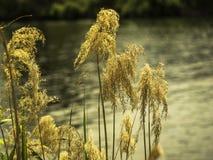 Usines par le côté de rivière Photo libre de droits