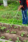 Usines protectrices d'aubergine de la maladie fongique ou vermine avec des RP photographie stock
