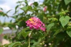 Usines roses de feuilles de fleur et de vert Image stock