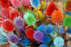 Usines sèches colorées image stock