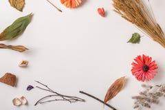 Usines sèches d'automne faisant l'espace vide Images libres de droits