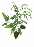 Usines sèches d'herbier illustration de vecteur de fleurs et de feuilles Photographie stock