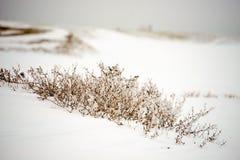 Usines sèches dans la neige Photo stock