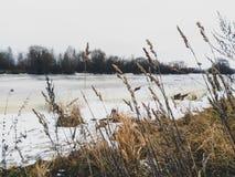 Usines sèches sur le fond de la rivière congelée photos stock