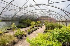 Usines s'élevant en serre chaude un jour ensoleillé Concept d'agriculture durable photos stock