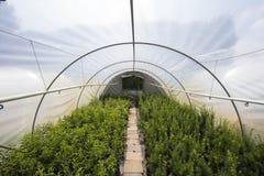Usines s'élevant en serre chaude un jour ensoleillé Concept d'agriculture durable photos libres de droits
