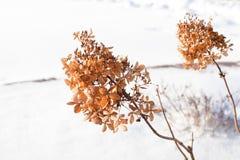 Usines sauvages dans la neige photos stock