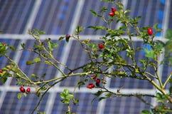 Usines sauvages et énergie solaire Image libre de droits