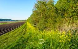 Usines sauvages fleurissantes fraîches le long d'un champ Photo stock