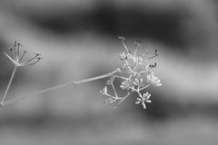 Usines sauvages infrarouges Image libre de droits