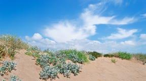 Usines sur la dune images stock
