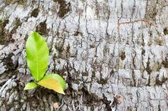 Usines sur le fond d'arbre Image stock