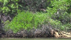 Usines sur le lit de la rivière soufflant en Windy Weather banque de vidéos