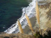 Usines sur le rivage d'océan sur Big Sur Image libre de droits