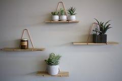 Usines sur les étagères en bois sur un mur blanc Photographie stock