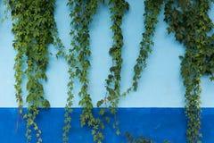 Usines sur un mur bleu images libres de droits