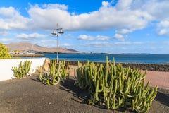 Usines vertes de cactus sur la promenade côtière Photo libre de droits