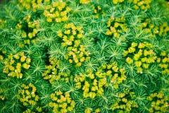 Usines vertes florales de fond d'été Photos libres de droits