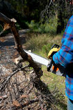Using a chainsaw. Operator using a chainsaw to trim pine trees Royalty Free Stock Image